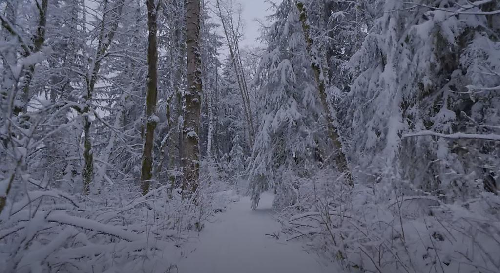 Wintery Mix in woods and roadways
