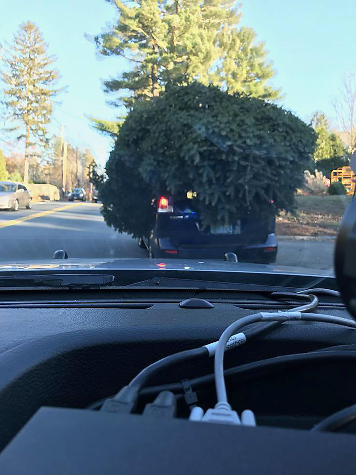Shippers Supplies How to Secure a Christmas Tree