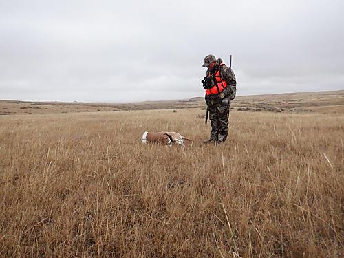 Kendal Bortisser antelope hunt in field