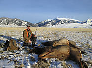 Hunter and Elk