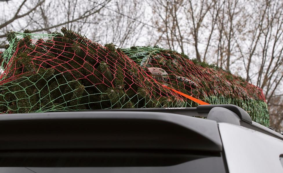 Christmas Tree On top of a van secured by a Ratchet Strap