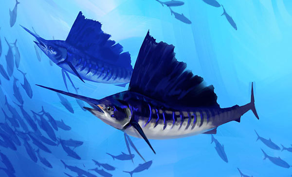 Sailfish illustration